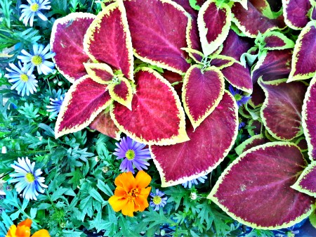 Blumen für das Lädchen